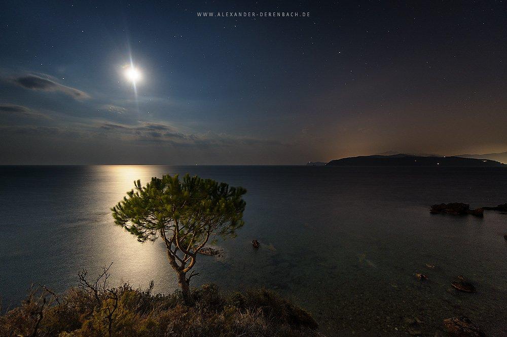 Tree under stars