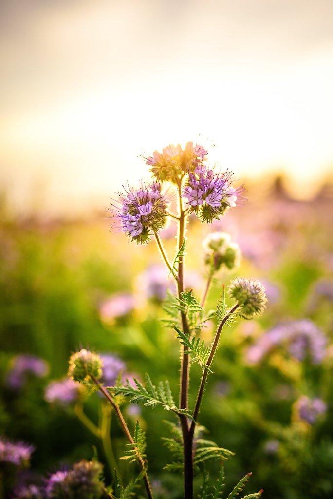 pflanzen-4.jpg